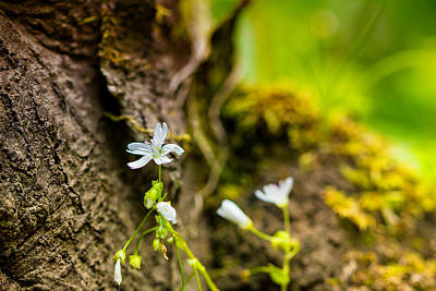 Photograph - Spring In Forest Park by Kunal Mehra