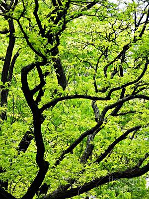 Photograph - Spring In Green And Black    by Sarah Loft