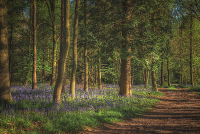 Bluebells Wall Art - Photograph - Spring In Haywood No 2 by Chris Fletcher