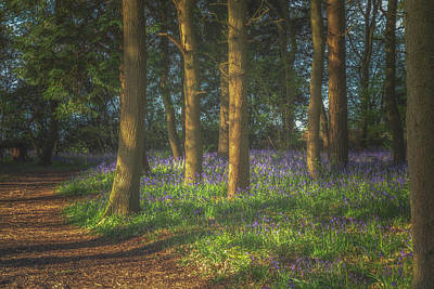Bluebells Wall Art - Photograph - Spring In Haywood No 3 by Chris Fletcher