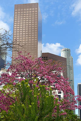 Photograph - Spring In L A by Lutz Baar