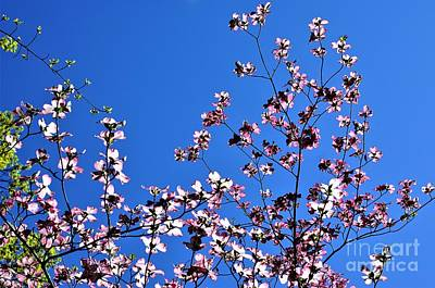 Photograph - Spring In Louisville by Merle Grenz