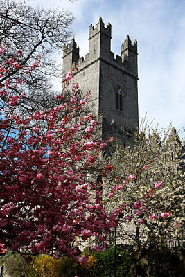 Cherry Blossom Photograph - Spring In Medieval Limerick Ireland by Pierre Leclerc Photography