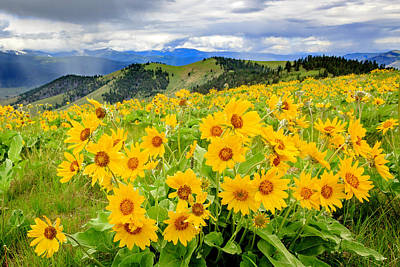 Photograph - Spring In Montana by Jack Bell