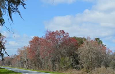 Photograph - Spring In North Florida by rd Erickson
