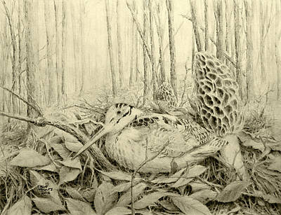 Woodcock Drawing - Spring In Ohio by Steve Mountz
