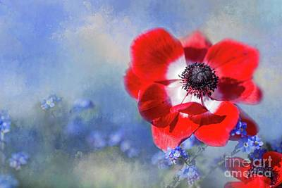Photograph - Spring In Red And Blue by Eva Lechner