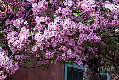 Photograph - Spring In Santa Fe by Roselynne Broussard