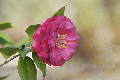 Pink Camellia Photograph - Spring In Savannah by Kim Hojnacki