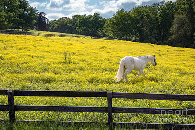 Franklin Tennessee Photograph - Spring In Tennessee by Bob Hemphill