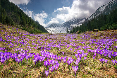 Photograph - Spring In The Carpathian Mountain  by Gutescu Eduard