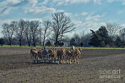 Amish Photograph - Spring In The Fields by David Arment
