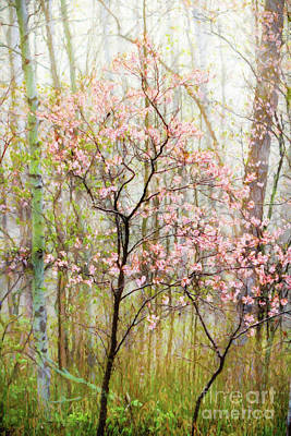 Photograph - Spring In The Forest by Lori Dobbs