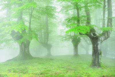 Fantasy Bark Photograph - Spring In The Forest by Mikel Martinez de Osaba