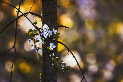 Photograph - Spring In The Forest by Vishwanath Bhat