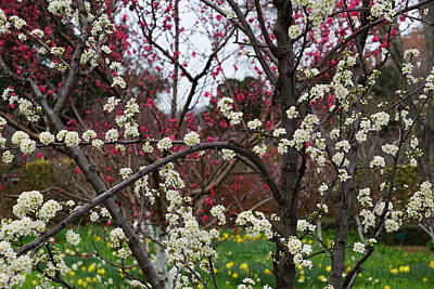 Natural White For Decorating Photograph - Spring In The Garden by YT Photo