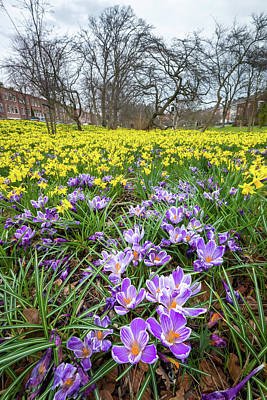 Photograph - Spring In The Hague by Joe Doherty