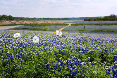 Photograph - Spring In The Hill Country by Cathy Alba