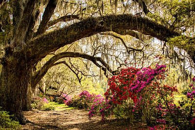 Photograph - Spring In The Lowcountry 2 by Lynne Jenkins