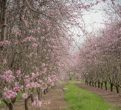 Photograph - Spring In The Orchard by Wendy Carrington