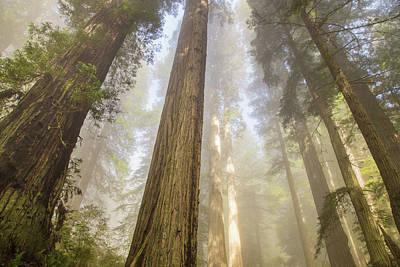 Photograph - Spring In The Redwoods by Kunal Mehra