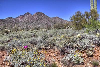 Photograph - Spring In The Sonoran Desert At Spur Cross Ranch by Roger Passman