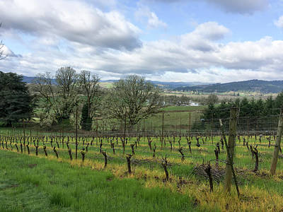 Photograph - Spring In The Vineyard by Jean Noren