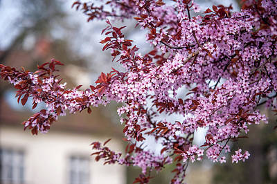 Photograph - Spring In Town by Jenny Rainbow
