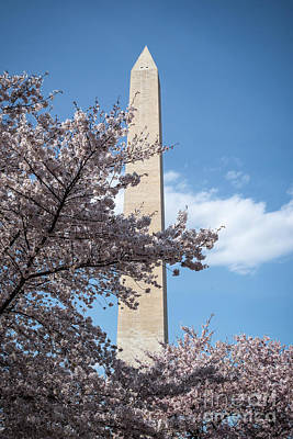 Photograph - Spring In Washington Dc by Judy Wolinsky