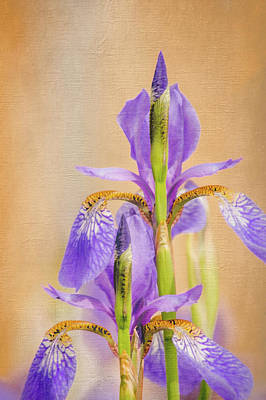 Photograph - Spring Irises 2 by Debra Martz