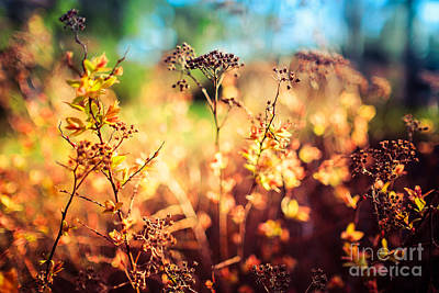 Photograph - Spring Is A New Beginning by Ismo Raisanen