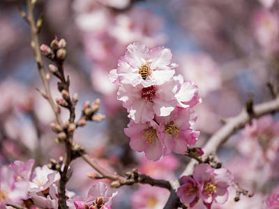Photograph - Spring Is Arrived by Yoel Koskas
