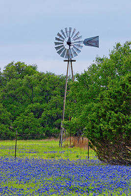 Photograph - Spring Is Blowing In The Wind by Linda Unger