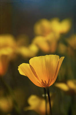 Photograph - Spring Is Calling  by Saija Lehtonen
