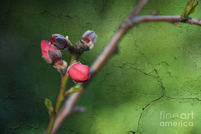 Photograph - Spring Is Coming  by Claudia Ellis
