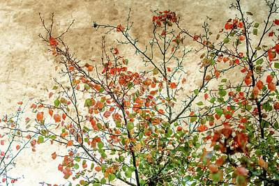 Falling Leaf Photograph - Spring Is Gone by Az Jackson