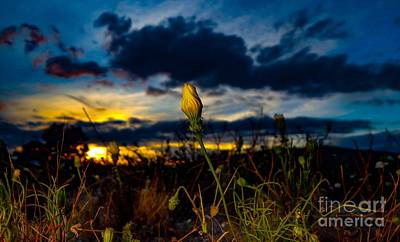 Photograph - Spring Is Here by Chris Tarpening