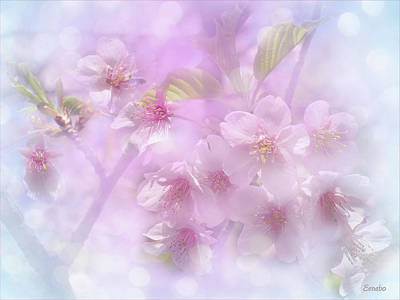 Photograph - Spring Is Here by Eena Bo