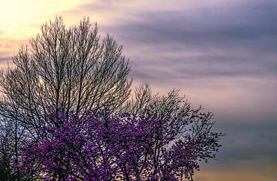 Photograph - Spring Is Here by Maria Coulson