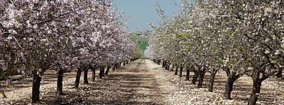 Photograph - Spring Is Here, Panorama by Yoel Koskas