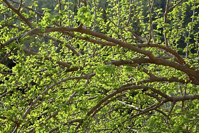 Spring Is Here Art Print by Yoel Koskas