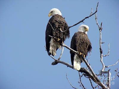 Bald Eagle Photograph - Spring Is In The Air 2 by Dora Miller