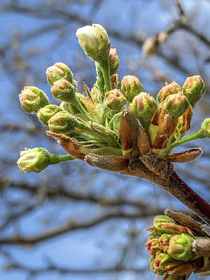 Photograph - Spring Is In The Air by Debra Martz