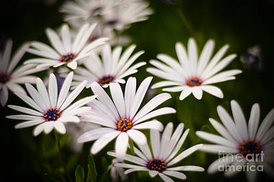 Art Print featuring the photograph Spring Is In The Air by Kelly Wade