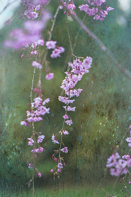 Photograph - Spring Is Weeping by John Rivera