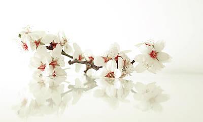 Spring Original