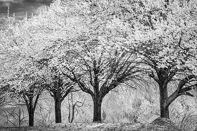 Photograph - Spring Joy In Black And White by Debra and Dave Vanderlaan