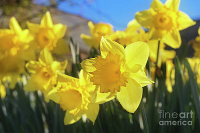Photograph - Spring Joy by Terri Waters