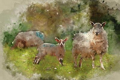 Spring Lamb And Ewe Mother In Spring Rural Farm Landscape Art Print