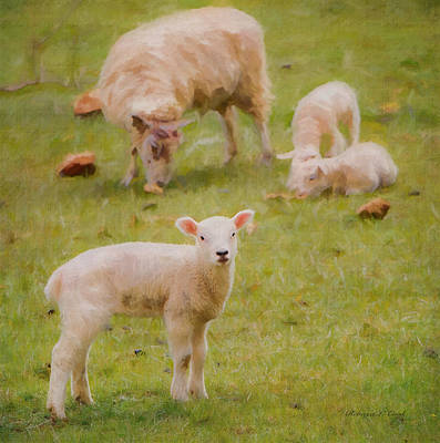 Mammals Royalty-Free and Rights-Managed Images - Spring Lamb by Bellesouth Studio
